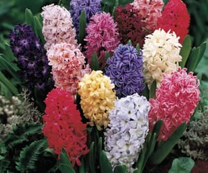 aesthetic, colors, and hyacinth image