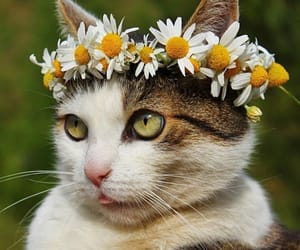 animal, crown, and cute image