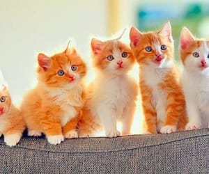kitten image