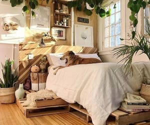 bedroom and dog image