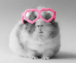 eyeglasses, glasses, and guinea image