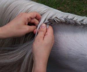 horse, vintage, and braid image