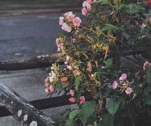floral, friendship, and lemons image