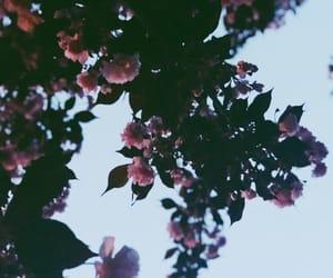 blossom, bulldog, and flowers image