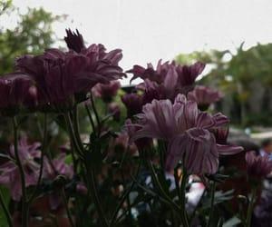 flor, flores, and purple image