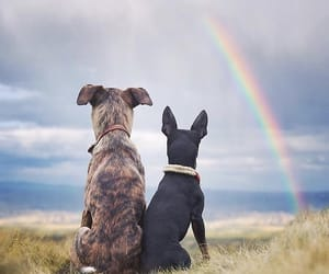 dog, rainbow, and instagram image