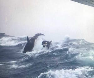 whales, killer whale, and nature image
