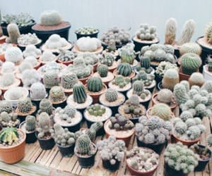 aesthetic, collection, and cactus image