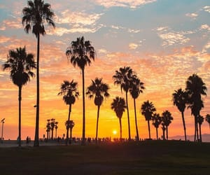 palm trees, southern california, and travel the world image