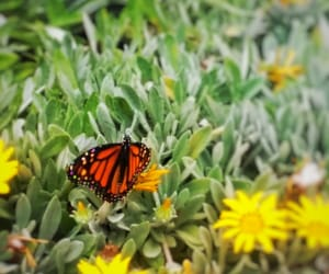 beauty, nature, and butterfly image