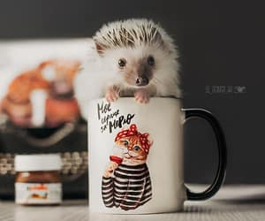 animals, baby, and coffee image
