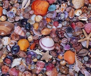 shell, seashells, and summer image