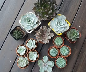 garden, gardening, and plants image