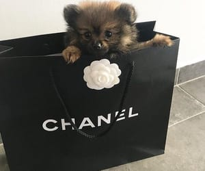 chanel, luxury, and cute image
