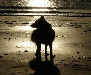 aesthetic, dog, and sunshine image