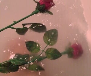 aesthetic, depressed, and roses image