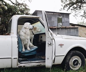 country and dog image