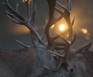deer, animals, and sun image
