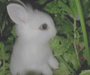 bunnie, small, and animal image