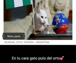 argentina, memes, and cat image