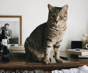 animals, cat, and indie image
