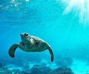 beautiful, reef, and sea turtle image