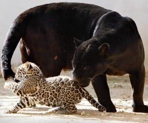 Animales image