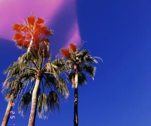 aesthetic, palm trees, and summer image