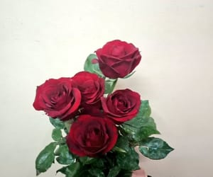 nature, red, and roses image