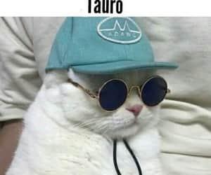 tauro, touro, and signo image
