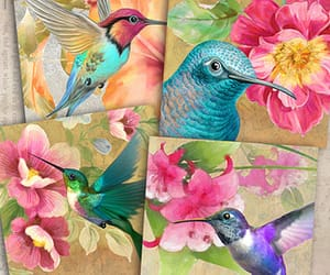 hummingbirds, art, and paints image