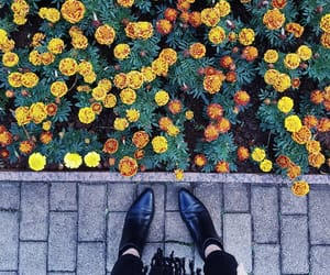 yellow orange green, alternative hipster indie, and flowers winter autumn image