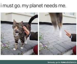 aliens, awesome, and cats image