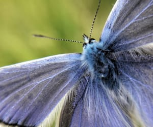 blue, butterfly, and grateful image