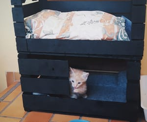 cat, cat house, and diy image