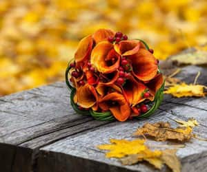 autumn, beautiful, and colours image