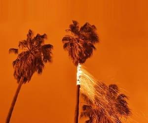 orange, tree, and aesthetic image