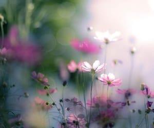 flowers, peace, and purple image