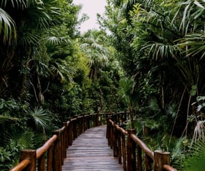 tropical, green, and nature image