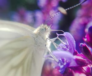 butterfly, flowers, and makro image
