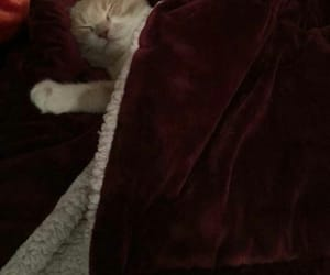 animals, kittens, and bed image