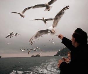 bird, theme, and sea image