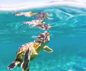 animals, blue, and turtle image