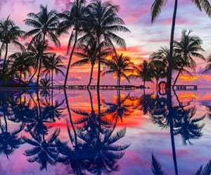 amazing, palms, and pink image