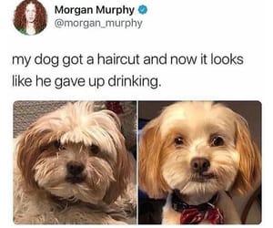 animal, dog, and haircut image
