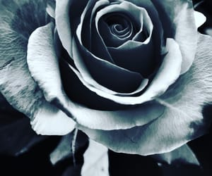 black&white, flowerpower, and photography image