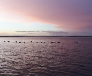 pastel, sun, and swans image