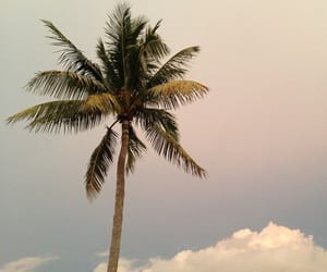 sky, palm trees, and clouds image