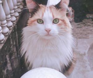 amazin, black, and cat image