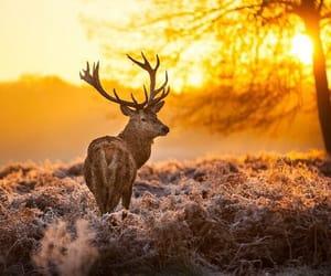 animal, field, and sunlight image